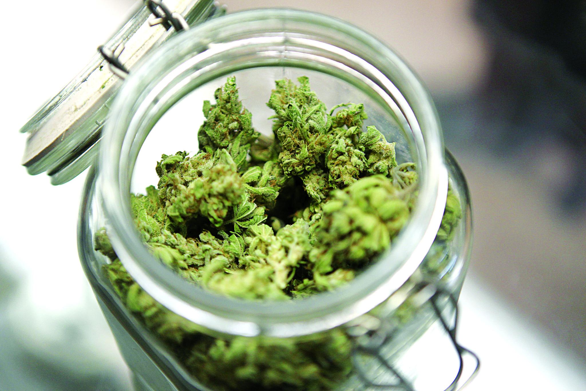 При претрес со судски налог откриена марихуана кај тетовец