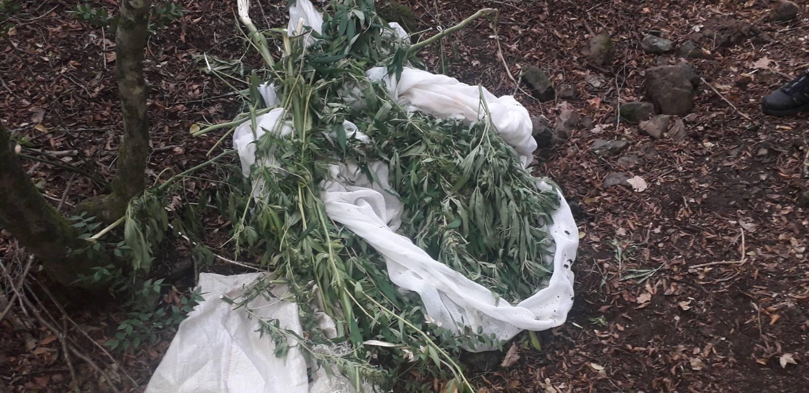 Двајца дебрани и албански државјанин под истрага за 5,480 килограми марихуана
