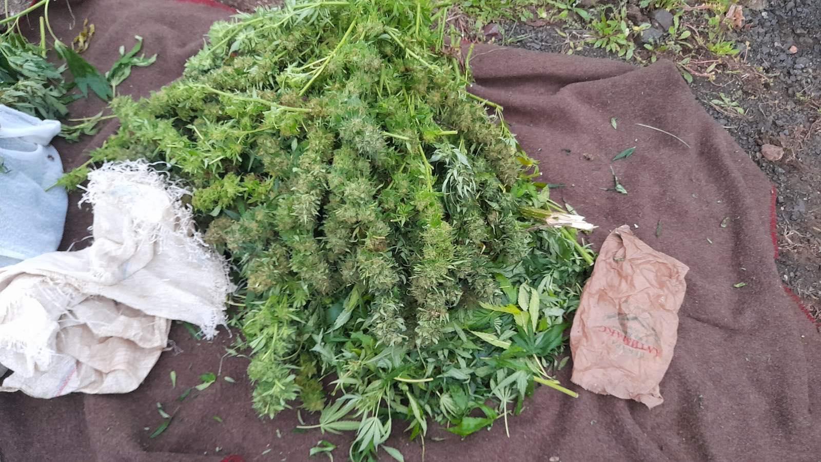 Тетовци фатени со марихуана